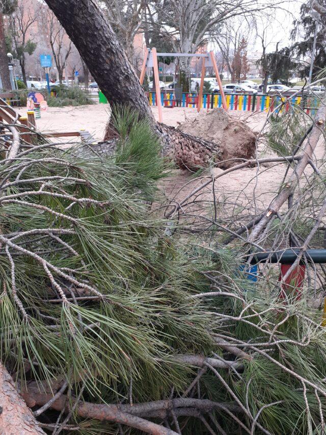 árbol roto raíces nevada histórica madrid
